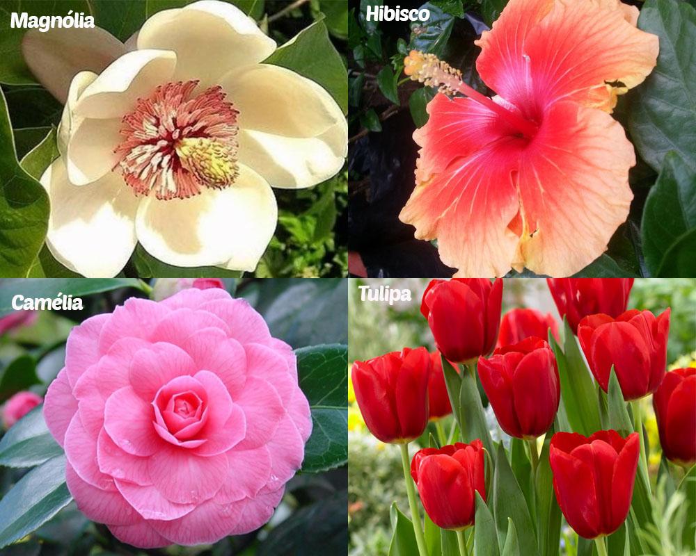 Inspirações Flores